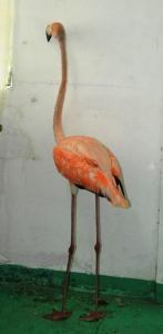 The flamingo that was saved
