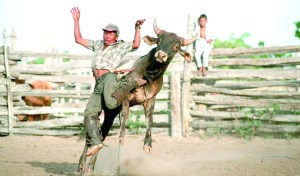 The Rupununi Rodeo has been a major attraction   for tourists  in recent years