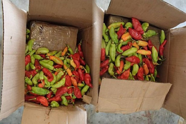 Packages of cocaine concealed in the boxes of hot peppers from Trinidad and Tobago. (Credit: Canada Border Services Agency)