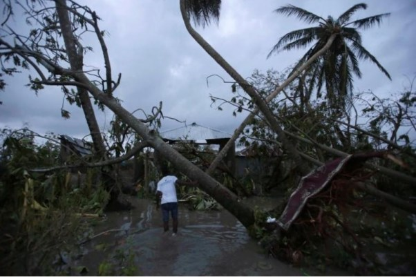 A man walks amongst trees damaged by Hurricane Matthew in Les Cayes, Haiti, October 5, 2016. REUTERS/Andres Martinez Casares