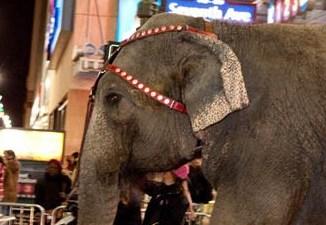 Elephant Walk: Elefanti a Passeggio per Manhattan