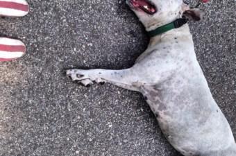 A passeggio con un cane a New York
