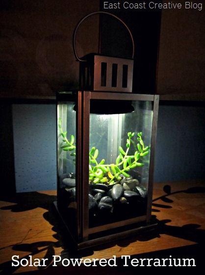 Solar Powered Terrarium[6]