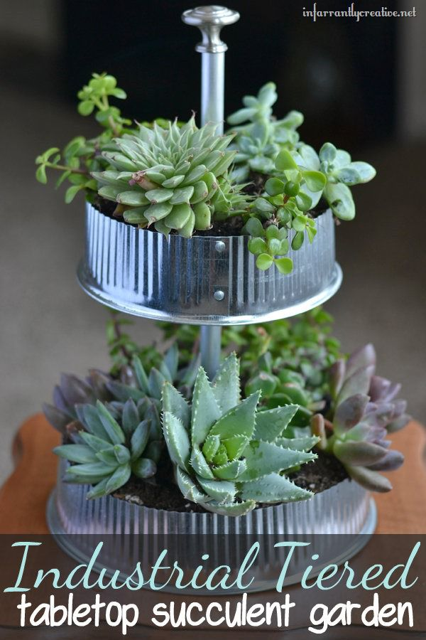 Industrial Tiered Tabletop Succulent Garden