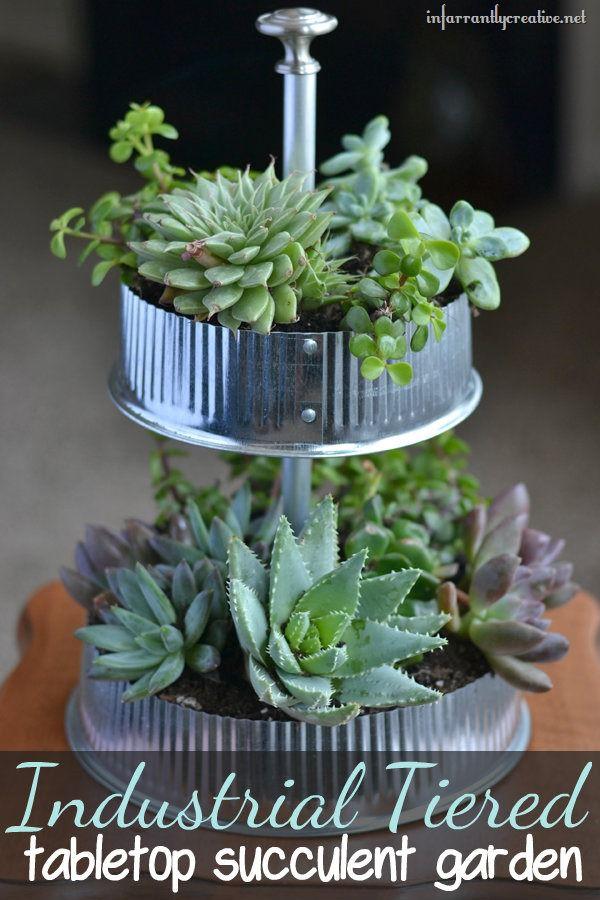 tabletop terranium succulent garden