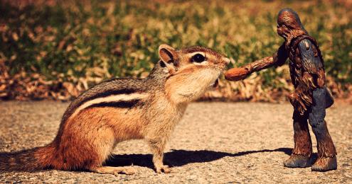 chewiesquirrel