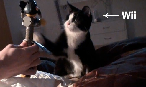 deadmau5-has-wii-teases-cat