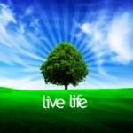 Infidelity & Affair Help: Live Life