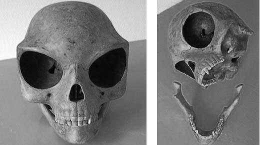 alien Sealand skull