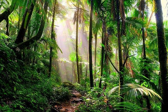 El Yunque National Forest Alien Encounters: A Camping Group Attacked By Aliens