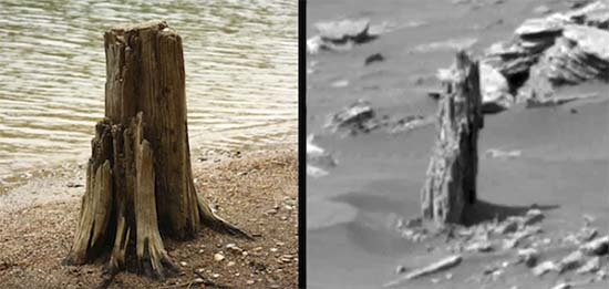 NASA Images Show The Remains of a Petrified Tree On Mars