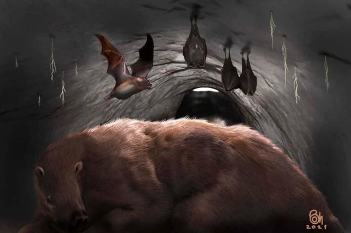 Giant Vampire Bat