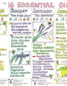 Essential oils for home use chart also infinity foods ethical rh infinityfoodswholesaleop