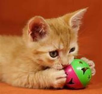 https://images.search.yahoo.com/search/images;_ylt=AwrEzNTdS7BdT08A37mJzbkF;_ylu=X3oDMTBsZ29xY3ZzBHNlYwNzZWFyY2gEc2xrA2J1dHRvbg--;_ylc=X1MDOTYwNjI4NTcEX3IDMgRhY3RuA2NsawRjc3JjcHZpZANtLmdURmpFd0xqS29wR2tIVzlhX2Znb09ORFl1TVFBQUFBQlJsMlRhBGZyA21jYWZlZV91bmludGVybmF0aW9uYWwEZnIyA3NhLWdwBGdwcmlkA0FReVg3d1RfUWd1djlYcjdTLnV1SUEEbl9zdWdnAzEEb3JpZ2luA2ltYWdlcy5zZWFyY2gueWFob28uY29tBHBvcwMwBHBxc3RyAwRwcXN0cmwDBHFzdHJsAzcEcXVlcnkDa2l0dGVucwR0X3N0bXADMTU3MTgzNDk0Ng--?p=kittens&fr=mcafee_uninternational&fr2=sb-top-images.search&ei=UTF-8&n=60&x=wrt#id=12&iurl=https%3A%2F%2Fwww.pets4homes.co.uk%2Fimages%2Farticles%2F3467%2Flarge%2Fwhen-does-a-kittens-eyes-change-colour-56bb4d9373101.jpg&action=click