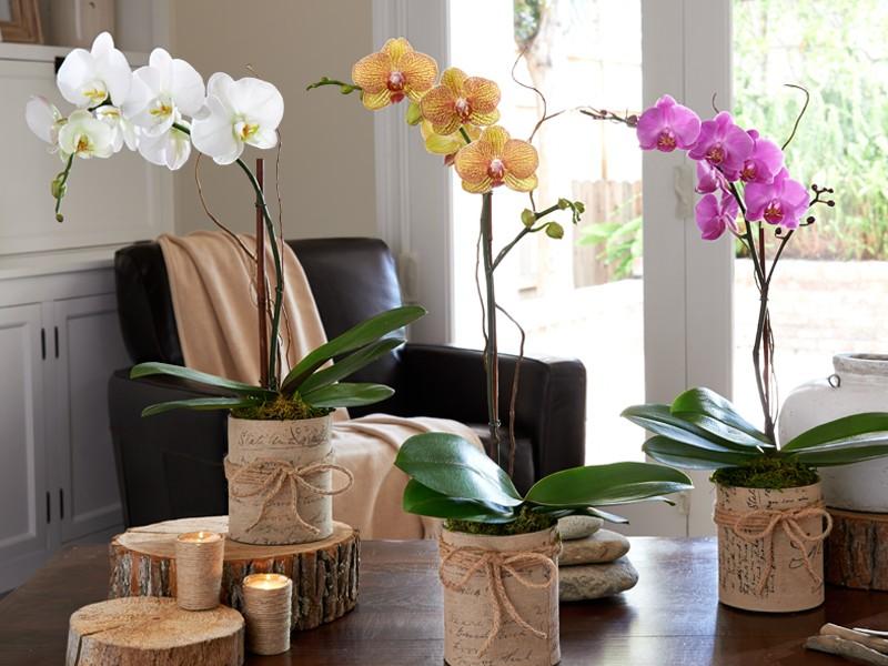 Cara Menanam Bunga Anggrek  Pedoman Praktis