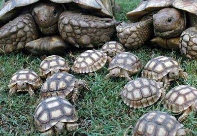 Resultado de imagen de La tortuga