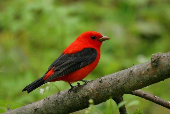 Las aves ms hermosas  Informacion sobre animales