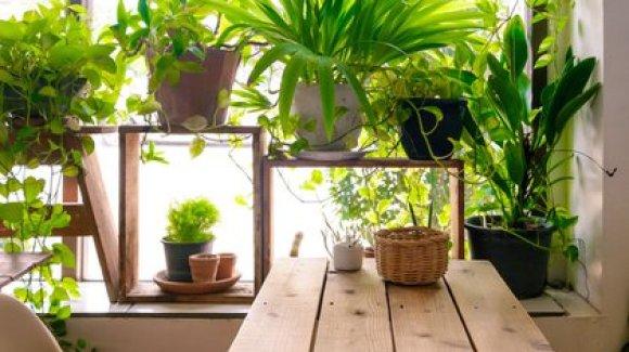 Las plantas que se encuentran en macetas sufren más el frío que las plantadas en tierra