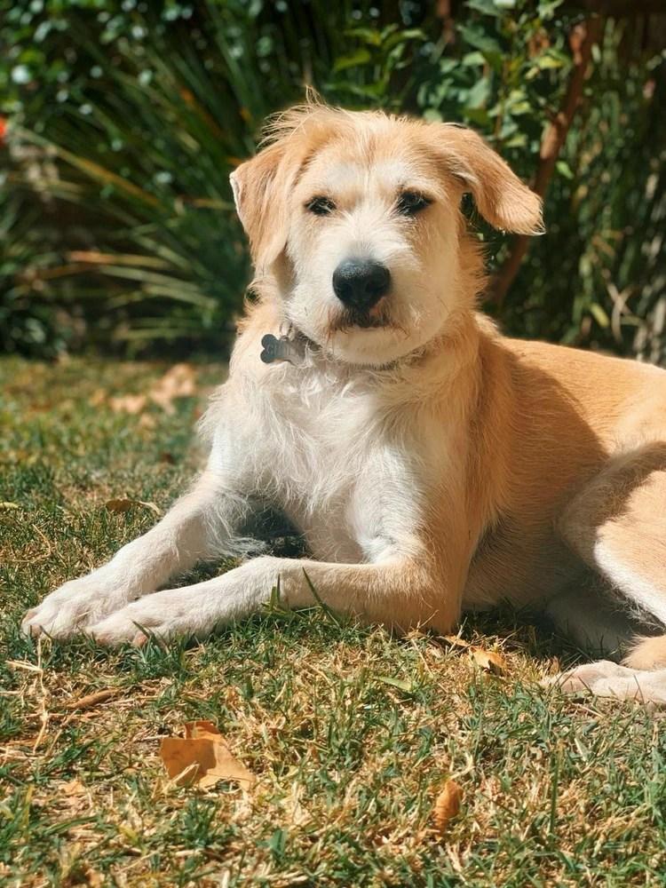 Según una encuesta realizada a dueños de perros y gatos, el 53% declara que sus mascotas no se vieron afectadas por la cuarentena
