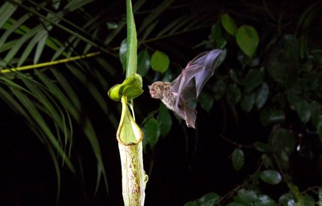 Presenta imágenes nunca vistas de la naturaleza y sus hábitats (Foto: Netflix)