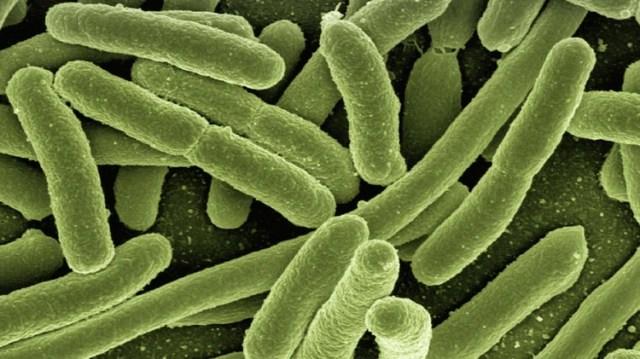 Los científicos crearon esta bacteria genéticamente modificada, capaz de sobrevivir a partir del consumo de dióxido de carbono en lugar de azúcar (Foto: Pixabay)