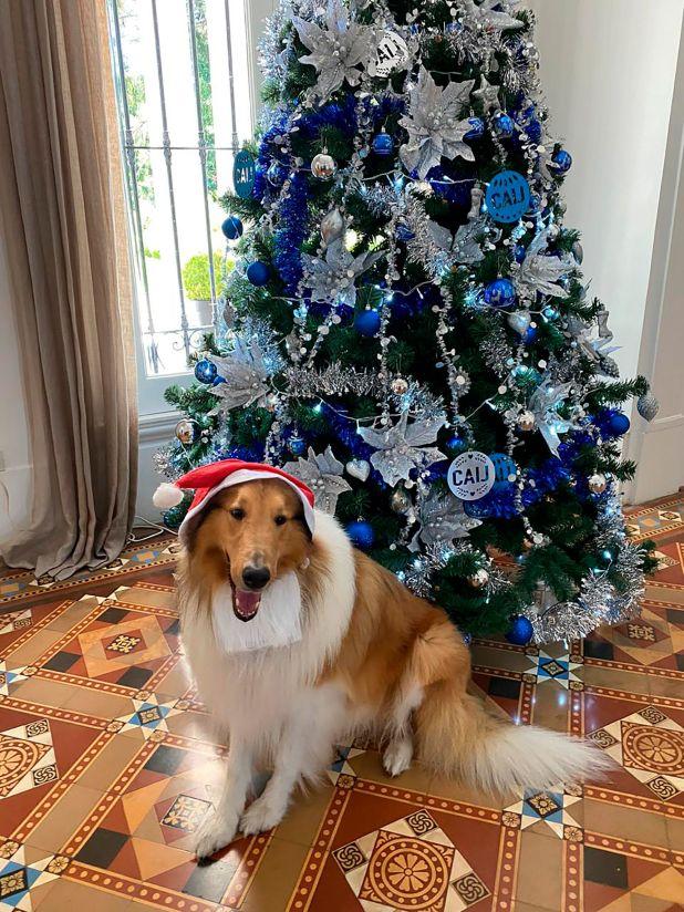 Dylan y el árbol de Navidad que le regaló a Alberto Fernández la Cámara Argentina de la Industria del Juguete.