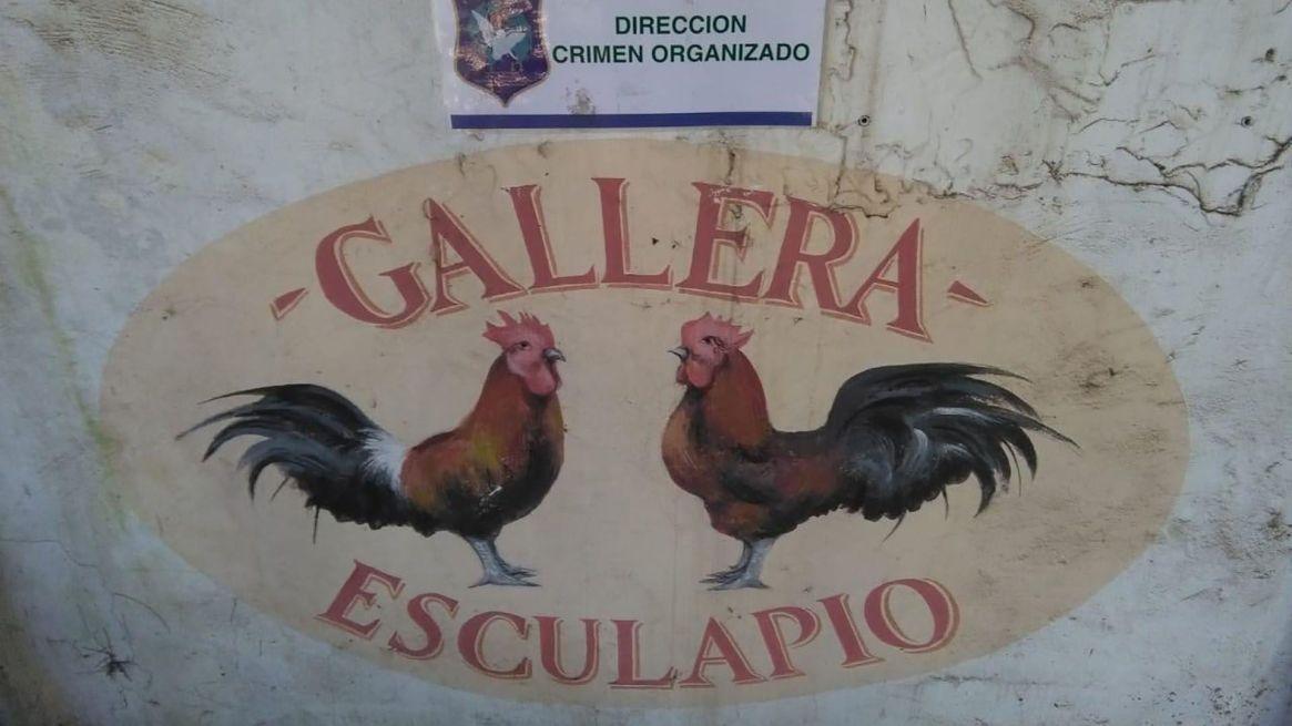 """En el campo donde más animales se rescataron, se filmó la serie """"Un gallo para Esculapio"""""""