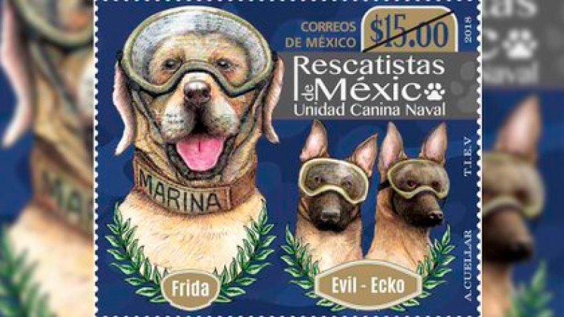 Frida, Evil y Ecko, de los binomios caninos de la Armada mexicana, y tuvieron su propio sello postal (Foto: Archivo)