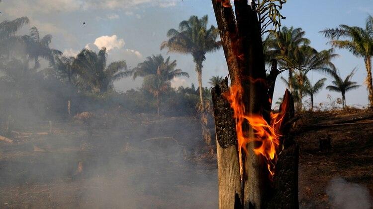 Grandes cantidades de hectáreas han sido afectadas por el fuego (Reuters)