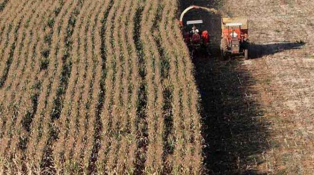 Foto de archivo. Plantas de maíz alto son cosechadas en Santo Antônio do Jardim en Brasil. 6 de febrero de 2014.  REUTERS/Paulo Whitaker.
