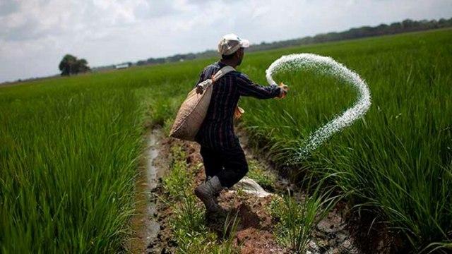 Un granjero usa fertilizante urea en la granja El Charcote en el estado de Cojedes (Reuters)