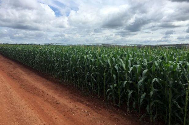 En las últimas campañas no solamente hubo un aumento de la siembra y cosecha de maíz en la Argentina, sino también de sus exportaciones.  REUTERS/Marcelo Rodrigues Teixeira