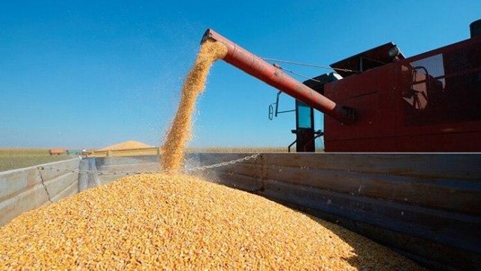 Proyectan para el maíz dos millones de toneladas extra.