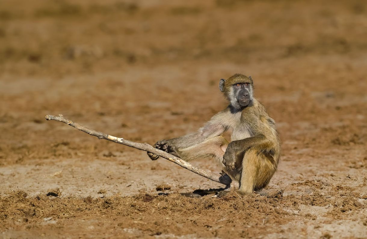 (Willem Kruger/The Comedy Wildlife Photography Awards 2019)