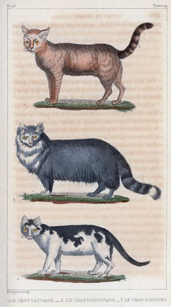 Obras completas (ilustradas), Buffon, 1830, ed. F.D. Pillot, Paris