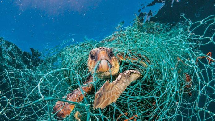 Además del calentamiento global, las tortugas marinas son víctimas de los desechos plásticos, las redes de pesca y los derrames de petróleo. (NatGeo)