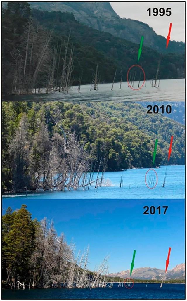 La diferencia de los mismos troncos de árboles respecto del agua a lo largo del tiempo