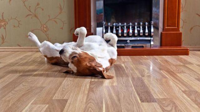 Todo lo hay que tener en cuenta para vivir con un perro en un departamento. (istock)