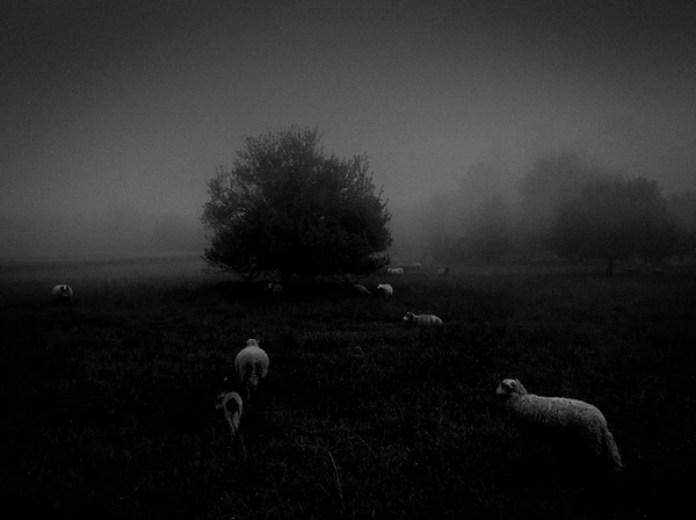 """Dentro de la categoría """"Naturaleza"""", el primer puesto quedó en manos de Sukru Mehmet Omur con """"Morning Fog"""" (Niebla matinal). La imagen se tomó con un iPhone 6S en Tolouse, Francia."""