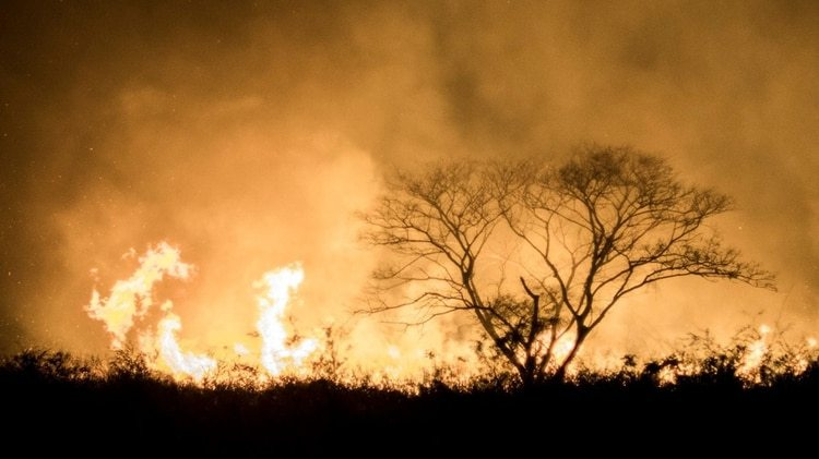 Ambientalistas y grupos indígenas han criticado la política de desmonte fomentada por el gobierno de Morales.
