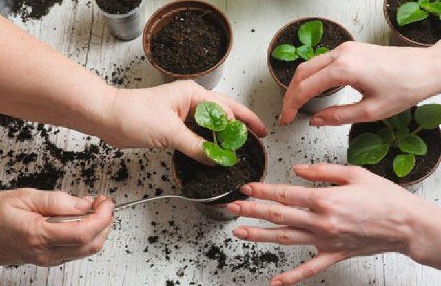 Para fertilizar la tierra se pueden usar las cenizas de la chimenea