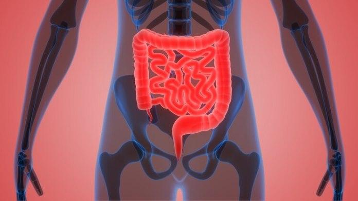 Los antibióticos dañan el microbioma, lo cual permite eldespliegue de bacterias peligrosas.(iStock)