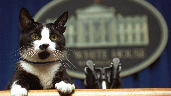 Socks, el gato del ex presidente Bill Clinton fallecidoel 20 de febrero del 2009