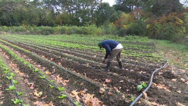 La mayoría de los campesinos alquilan las tierras para producir