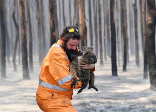 El rescatista Simon Adamczyk con un koala en un bosque incendado cerca de Cape Borda, en el sudesde de Adelaida, en Australia (Reuters)