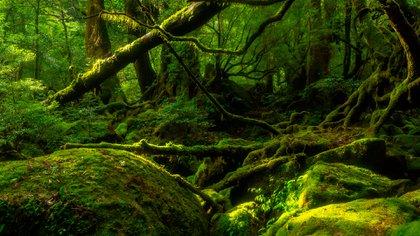 Kyushu, situada al sudoeste de la isla principal de Honshu, lo reúne todo a la vez: un clima templado, una naturaleza de un verde lujurioso, fuentes calientes y formaciones volcánicas con unas formas misteriosas (Shutterstock)
