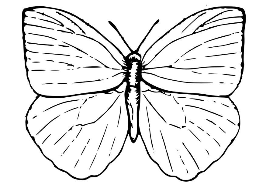 Moth Template Clipart