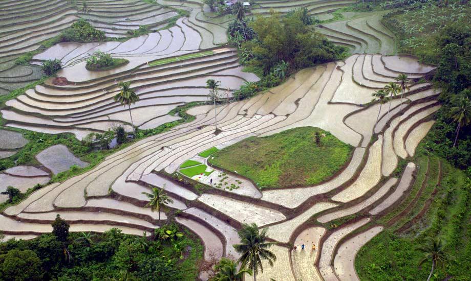 rice terasses bohol philippines