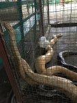 The Zoocolate Thrills Theme Park Loboc Bohol Philippines 003