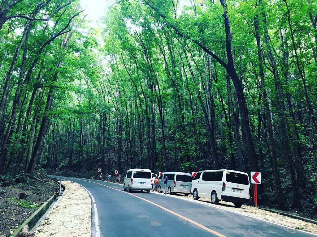 Loboc Bilar Man Made Forest Bohol Philippines Tourist Attraction 0003